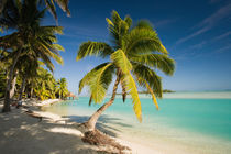 Beach on the island of Aitutaki in the Cook Islands by Danita Delimont