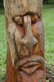 Handcarved tree with face von Danita Delimont
