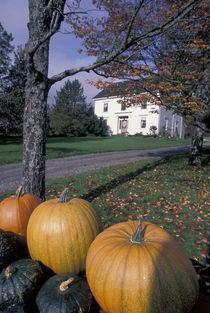 Pumpkins von Danita Delimont