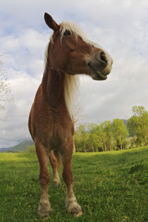 Tennessee von Danita Delimont