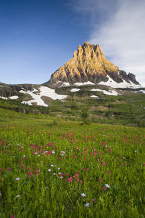 Wildflowers in the Hanging Gardens below Mt Clements at Logan Pass in Glacier National Park Montana by Danita Delimont
