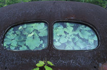 Vintage Oldsmobile car in decay with vines growing in and around it von Danita Delimont