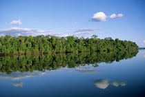 Forested river bank with perfect reflection of sky with puffy clouds and trees in the river by Danita Delimont