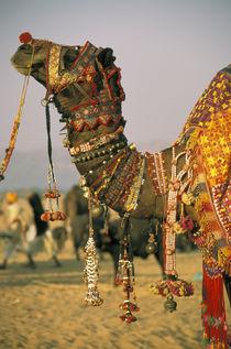Pushkar Camel Festival by Danita Delimont
