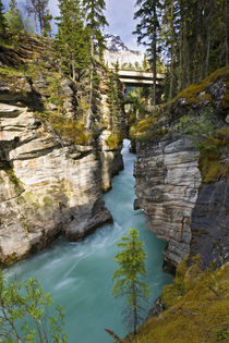 Athabasca Falls by Danita Delimont
