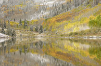 Fresh snow and aspen trees reflected in Maroon Lake by Danita Delimont