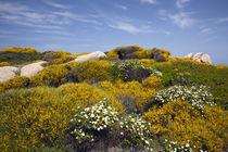 Capo Testa landscape by Danita Delimont