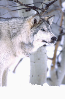 Movie Animal (Utah) von Danita Delimont