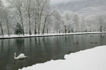 VIZILLE: Chateau de Vizille Park after winter stormSwan Lake by Danita Delimont