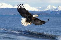 Southcentral Alaska by Danita Delimont