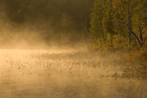 Sunrise mist on pond in autumn by Danita Delimont