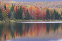 Mirror reflection of autumn colors von Danita Delimont