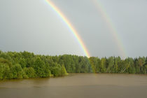 Double rainbow over the forest by Danita Delimont