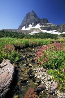 Wild flowers and Mount Reynolds von Danita Delimont