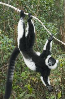 MADAGASCAR by Danita Delimont