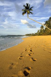 Beach Puerto Rico by Danita Delimont