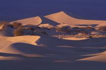 Mesquite Flat Sand Dunes by Danita Delimont