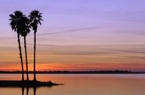 A trio of stately palms in silhouette on an island with lake water reflecting the pastel colors of the twilight sky von Danita Delimont