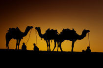 Young men resting with their camel at sunset along the dunes in the Thar Desert von Danita Delimont
