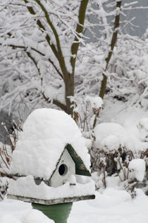 Close-up of bird house covered in snow by Danita Delimont