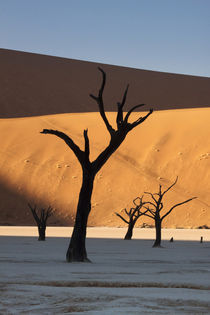 Sunrise on dead trees and dunes at Dead Vlei by Danita Delimont