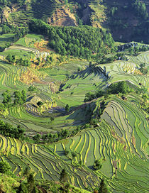 Pattern of green rice terraces at Laohu Zui (Tiger's Mouth) von Danita Delimont