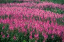 Forillon National Park von Danita Delimont