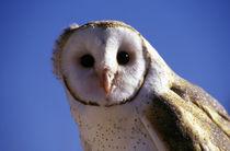 Barn Owl von Danita Delimont