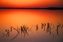 Silhouettes of dead tree branches protrude through water on Lake Apopka at sunset by Danita Delimont