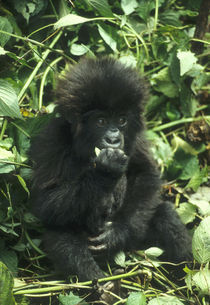Rwanda von Danita Delimont