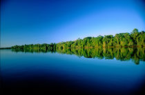 Forested river bank reflected in the water with no clouds in the sky by Danita Delimont