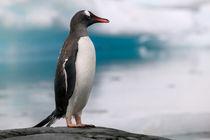 Antarctica Pennisula - by Danita Delimont