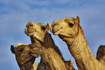 Egypt by Danita Delimont