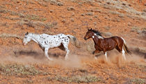 Horses roaming the Big Horn MT of Shell Wyoming by Danita Delimont