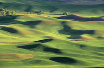 View from Steptoe Butte by Danita Delimont