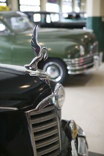 1940s Packard Hood Ornament by Danita Delimont