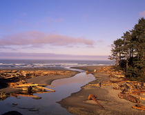Kalaloch Beach and Kalaloch Creek von Danita Delimont