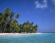 Maldives by Danita Delimont