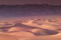 Khongoryn sand dunes von Danita Delimont