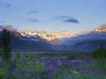 New Zealand by Danita Delimont