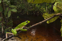 Guyana von Danita Delimont