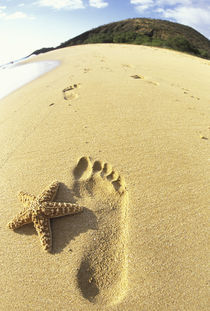 Footprint and starfish in sand by Danita Delimont