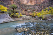 The Virgin River in autumn in Zion National Park in Utah von Danita Delimont