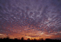 Altocumulus clouds at sunset by Danita Delimont