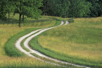 Road winding through meadow by Danita Delimont