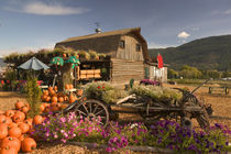 Log Barn Fruitstand /Autumn by Danita Delimont