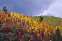 Logan Canyon in Utah in autumn with passing storm von Danita Delimont