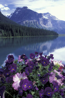 Pansies and Emerald Lake by Danita Delimont