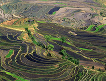 Rice Terraces near Leuy Villge by Danita Delimont