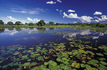 Waterways in Pantanal by Danita Delimont